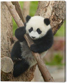 Obraz na Płótnie Giant Baby Panda na drzewie