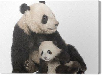 Obraz na Płótnie Giant Panda (18 miesięcy) - Ailuropoda melanoleuca