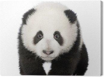 Obraz na Płótnie Giant Panda (4 miesiące) - Ailuropoda melanoleuca