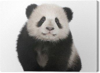 Obraz na Płótnie Giant Panda (6 miesięcy)