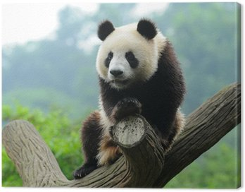 Obraz na Płótnie Giant Panda Bear w drzewo