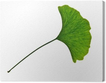 Obraz na Płótnie Ginkgo biloba, Pielęgnacja i dobre samopoczucie