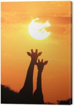 Obraz na Płótnie Giraffe - African Wildlife Background - Pair of Gold