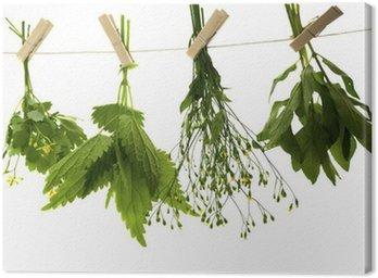 Obraz na Płótnie Glistnik ziele pokrzywy mięty
