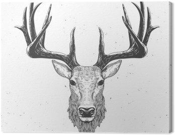 Głowa jelenia na białym