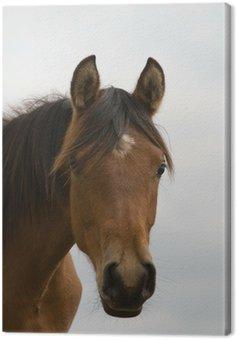 Obraz na Płótnie Głowa konia