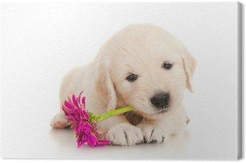Obraz na Płótnie Golden retriever puppy z kwiatem