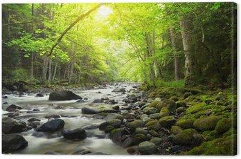 Obraz na Płótnie Górskiej rzeki w lesie