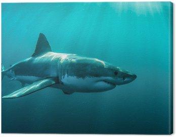 Obraz na Płótnie Great White Shark podwodne