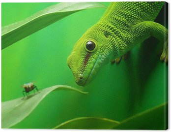 Obraz na Płótnie Green Gecko jaszczurka