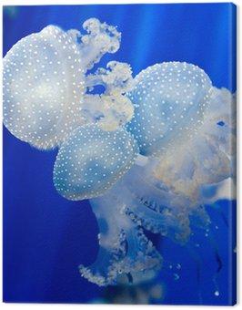 Grupa jasnoniebieskim meduzy