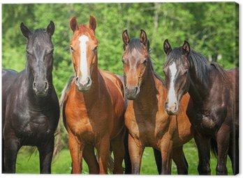 Obraz na Płótnie Grupa młodych koni na pastwisku