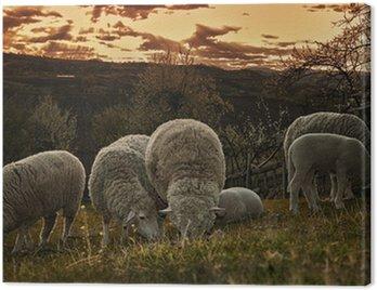 Obraz na Płótnie Grupa wypasu owiec na pastwisku