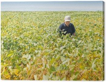 Obraz na Płótnie Happy rolnika w żyznej polu soi