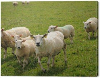 Obraz na Płótnie Herd frolicking na łące