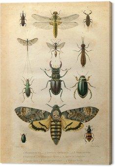 Histoire naturelle: Les insectes