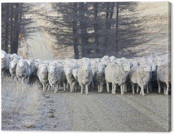 Obraz na Płótnie Hodowla owiec