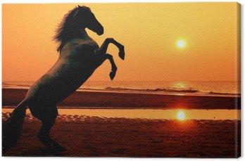 Obraz na Płótnie Hodowlę konia o zachodzie słońca