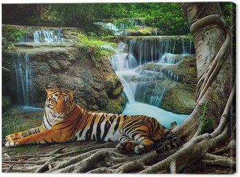 Obraz na Płótnie Indochiny tygrysa leżącego z relaksu w banyantree przeciwko bea