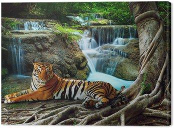 Indochiny tygrysa leżącego z relaksu w banyantree przeciwko bea