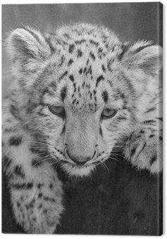 Obraz na Płótnie IRBIS, snow leopard (Panthera uncia)