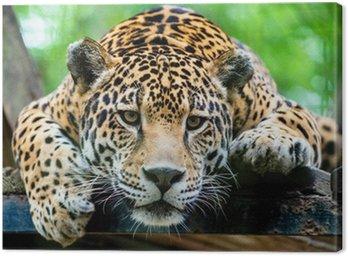 Obraz na Płótnie Jaguar Ameryki Południowej