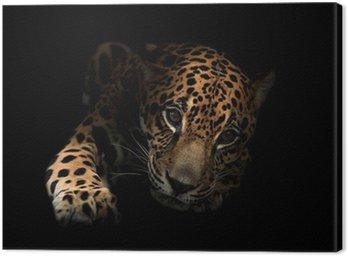 Obraz na Płótnie Jaguar (Panthera onca) w ciemności