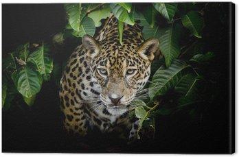 Obraz na Płótnie Jaguar portret