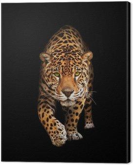 Obraz na Płótnie Jaguar w ciemności - widok z przodu, odizolowane