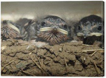 Obraz na Płótnie Jaskółcze gniazdo