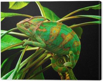 Obraz na Płótnie Jeden Jemen kameleona