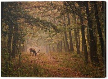 Obraz na Płótnie Jelenie w lesie