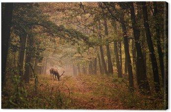 Jelenie w lesie