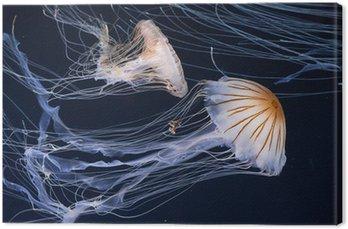 Obraz na Płótnie Jellyfish pływanie w oceanie