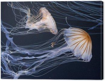 Jellyfish pływanie w oceanie