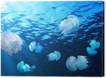 Obraz na Płótnie Jellyfishes pływające w wodzie niebieski, Morza Czarnego