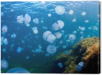 Obraz na Płótnie Jellyfishes (Rhizostoma Pulmo), na Morzu Czarnym.