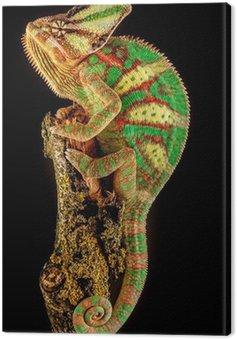Obraz na Płótnie Jemen kameleona