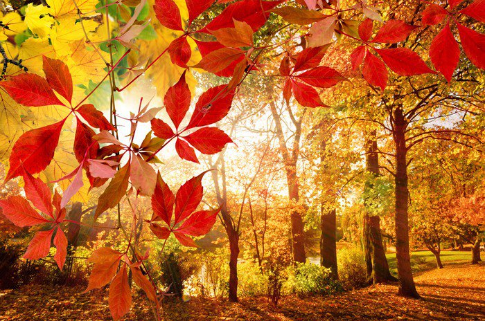 Znalezione obrazy dla zapytania park jesień