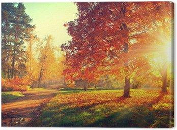 Obraz na Płótnie Jesień sceny. Spadek. Drzew i liści w świetle słonecznym