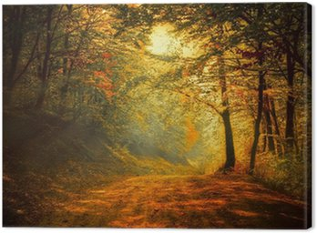 Obraz na Płótnie Jesień w lesie
