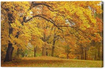 Obraz na Płótnie Jesień / złote drzewa w parku