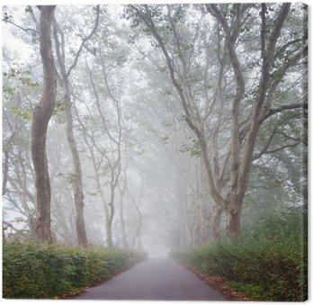 Obraz na Płótnie Jesień zobaczyć na ścieżce w alei drzewa samolot we mgle