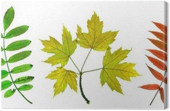 Obraz na Płótnie Jesienne liście klonu, jesionu i Sorb