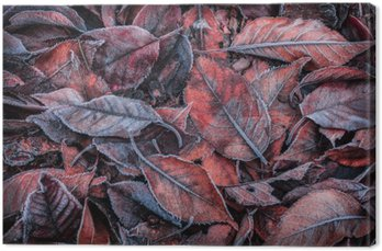 Obraz na Płótnie Jesienne liście pokryte szronem - tło