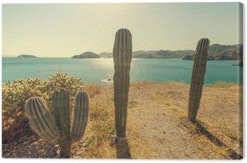 Obraz na Płótnie Kaktus w Meksyku