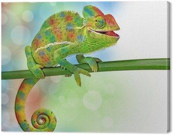 Obraz na Płótnie Kameleon i kolory