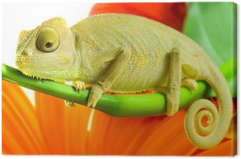 Obraz na Płótnie Kameleon na kwiat.