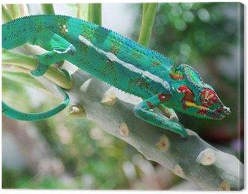 Obraz na Płótnie Kameleon środowisko naturalne