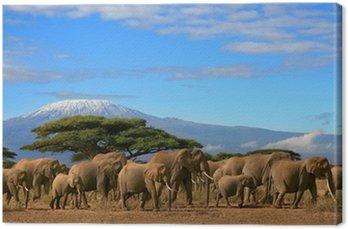 Obraz na Płótnie Kilimanjaro Z Herd Elephant